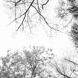 Kreis-Baum-Grenze Stockbild