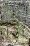 Kreisbaumbeschaffenheit Stockfotos