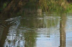 Kreise auf dem Teich Lizenzfreie Stockfotografie