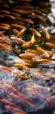 Kreise auf dem Wasser lizenzfreie stockfotografie