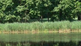 Kreise auf dem Wasser am Waldsee stock video