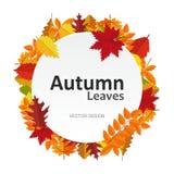 Kreisfahne mit Herbstlaub Rahmen-Aufkleberkarte der Herbstsaison runde Hintergrund Ihr Design vektor abbildung