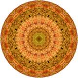 Kreisform Echeveria-longissima Zusammenfassung 1 Stockfotos