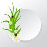 Kreisrahmen mit Gras und Kamille Stockbild
