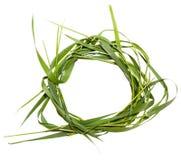 Kreisrahmen vom Gras Stockbilder