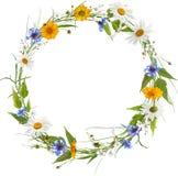 Kreisrahmen von den Frühlingsblumen Stockfotos