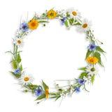 Kreisrahmen von den Frühlingsblumen Lizenzfreie Stockfotos
