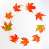 Kreisrahmen von Herbstahornblättern Lizenzfreie Stockbilder