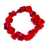 Kreisrahmen von roten rosafarbenen Blumenblättern Lizenzfreies Stockbild