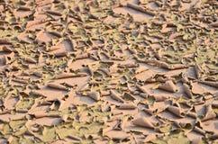 Krekingowa ziemska skóra Fotografia Stock