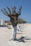 Kremasti strandträd Rhodes Greece Arkivbild