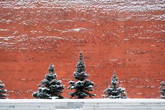 The Kremlin Wall. View of Moscow Kremlin wall and some spruce trees in front of the wall Stock Image