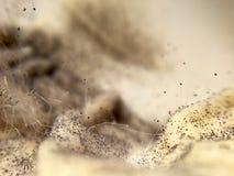 Kremowy ser przerastający z karmowymi foremka grzybami fotografia stock