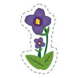 kreskówka afrykańskiego fiołka kwiat ilustracja wektor