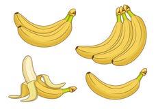 Kreskówka banana owoc Wiązki świeża banana wektoru ilustracja ilustracji