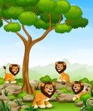 Kreskówka lwów grupa w dżungli royalty ilustracja