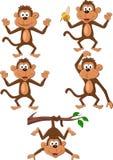 Kreskówka małpi set Obrazy Royalty Free