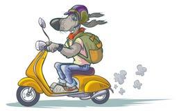 Kreskówka pies na hulajnoga Zdjęcie Stock
