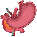 Kreskówka Stylowy rysunek Ludzki żołądek Fotografia Royalty Free