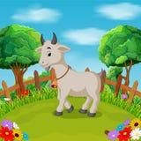Kreskówka szczęśliwy koźli uśmiech w gospodarstwie rolnym Zdjęcie Stock