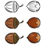 Kreskówka ustawiająca wizerunki hazelnut i acorn Fotografia Royalty Free