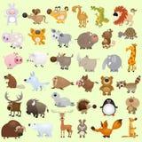 kreskówka zwierzęcy duży set Fotografia Royalty Free