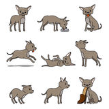 Kreskówki chihuahua psa charakter ilustracji