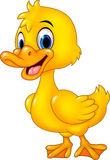 Kreskówki dziecka kaczki śmieszny pozować odizolowywam na białym tle Zdjęcie Stock