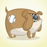 Kreskówki ilustracja uroczy buldog Wektoru psi charakter Obrazy Royalty Free