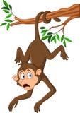 Kreskówki małpi obwieszenie na gałąź z jego ogonem ilustracji