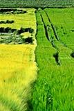 kreskówki pól ilustracji zielony styl Fotografia Stock