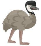 Kreskówki papuga odosobniona - emu - Zdjęcia Stock