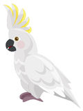 Kreskówki papuga odosobniona - kakadu - Fotografia Royalty Free