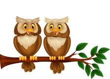 Kreskówki pary sowa na gałąź Zdjęcia Stock