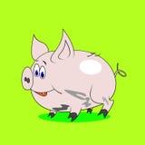 Kreskówki świnia Obrazy Stock