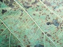 Kreskowej sztuki wzór na suchym liściu Obraz Royalty Free
