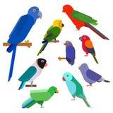 Kreskówek papugi inkasowe Papuzi dzikie zwierzę ptaki ustawiający Tropikalni piórkowi zoo ptaki i tropikalnej fauny ary latający  Zdjęcia Stock