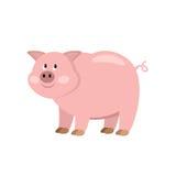 Kreskówki świnia Zdjęcie Royalty Free