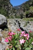 Kreta-Blumen Stockfotografie