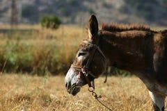 Kreta/Esel Stockfotos