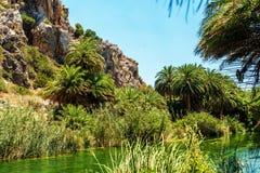 Kreta Grekland: skogen gömma i handflatan in fjärden Royaltyfri Fotografi