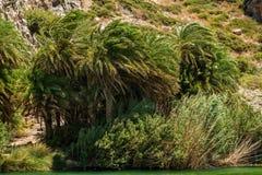 Kreta, Griechenland: Wald in der Palmen-Bucht Lizenzfreie Stockfotos