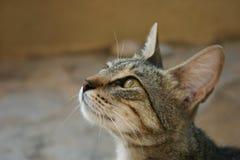 Kreta/Kat die voor voedsel bedelen Stock Foto