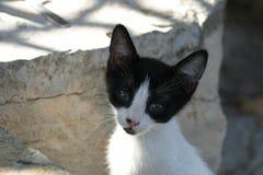 Kreta-/Schätzchenkatze, die um Nahrung bittet Stockfotografie