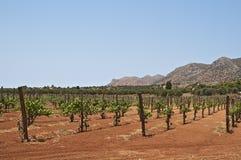 Kretenzische wijngaarden stock foto