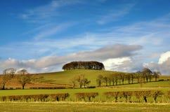 Kreupelbosje van bomen in Engels Platteland Royalty-vrije Stock Fotografie