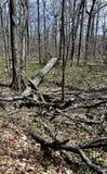 Kreupelhout op een bebost gebied royalty-vrije stock foto