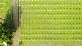 Kreuze auf dem niederländischen Kriegskirchhof in Jakarta stock footage