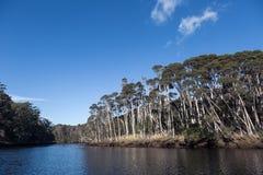 Kreuzen auf Leven River in Ulverstone Tasmanien Lizenzfreie Stockbilder