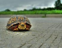 Kreuzen Sie die Straße Lizenzfreie Stockfotografie